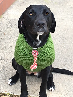 Ravelry The Ozzie Large Dog Sweater Pattern By Jenna Greer