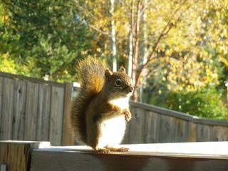Squirrel_sitting_small2