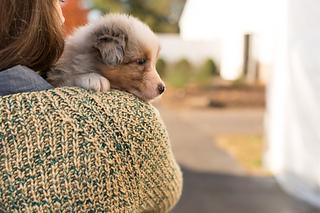 Rhinebeck_sweater-105_small2